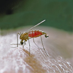 Muggenwerende middelen